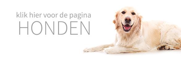 dierenhotel voor honden