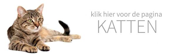 dierenhotel voor katten